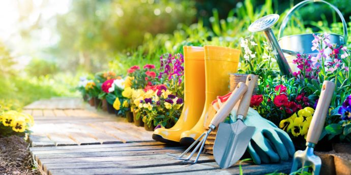 Gardening Advice - Expert Tips For a Blooming Garden
